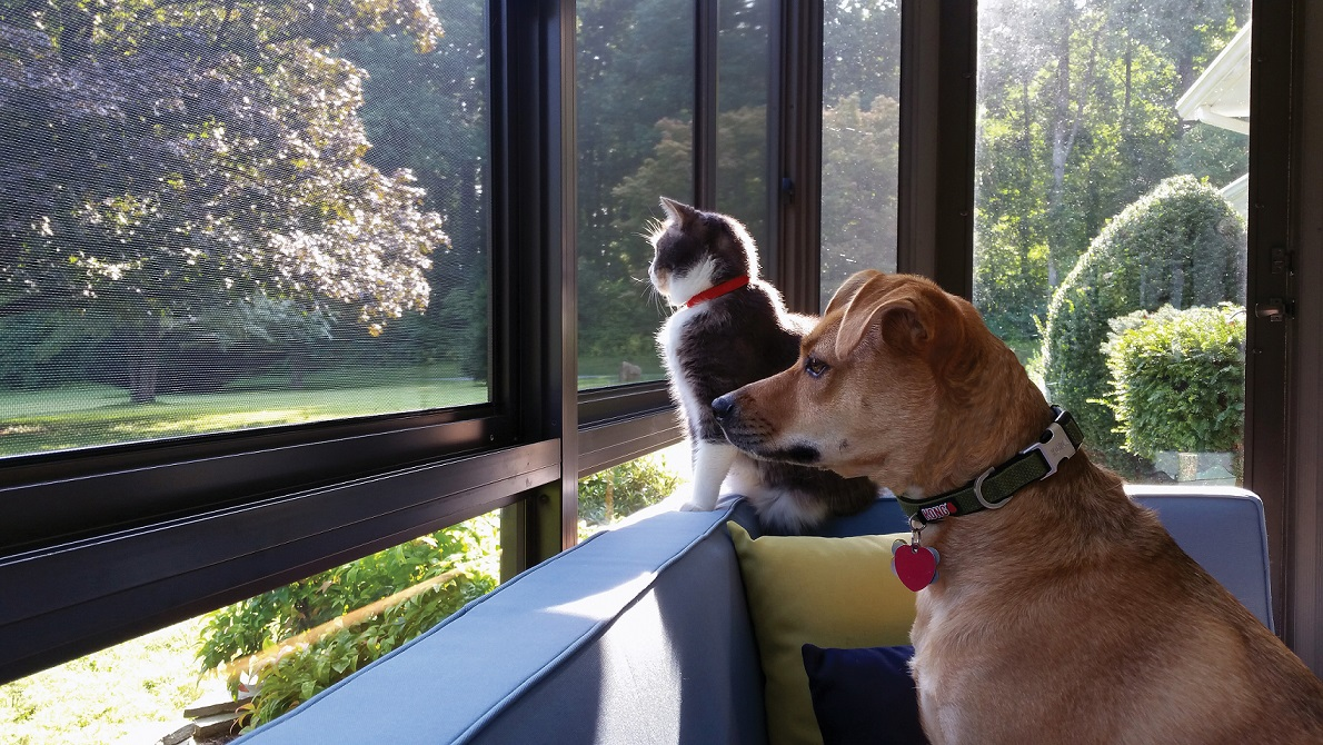 Create A Pet Friendly Space With A Three Or Four Season